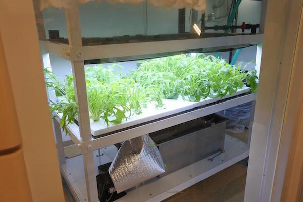 照明を浴びて野菜が育っています