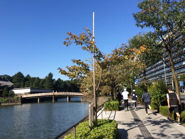 抜けるような青空と木々の緑がとても綺麗