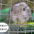 Photos: にんじん1