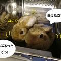Photos: すりっぱ3