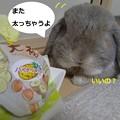 Photos: お茶4