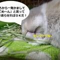 Photos: あ5