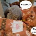 Photos: ぽかぽか2