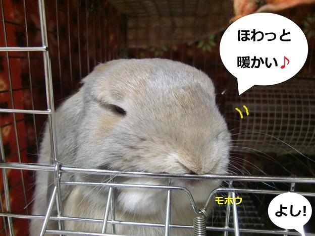 Photos: ぽかぽか4