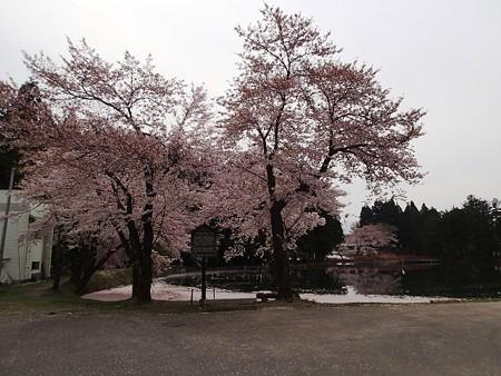 新潟 上の原 お松の池