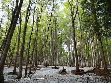 新潟 松之山温泉 美人林