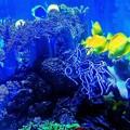 八景島 熱帯魚2