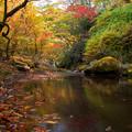 Photos: 秋景色を求めて・・・?