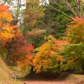 写真: 陽目渓谷の紅葉♪
