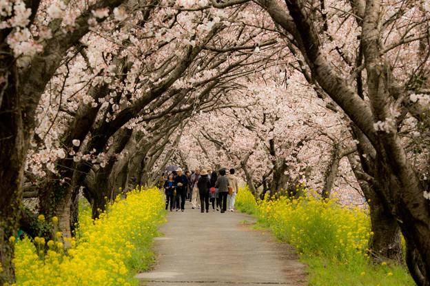 浮羽流川の春景色♪