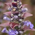 写真: 葉っぱが紫なの♪