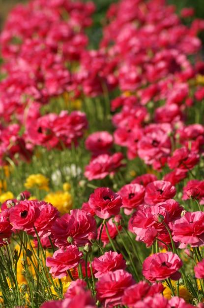 花いっぱいo(*^▽^*)o