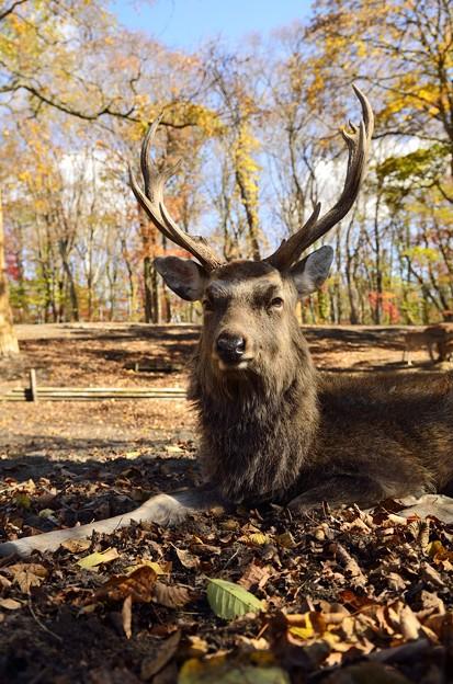 鹿公園のハンサム