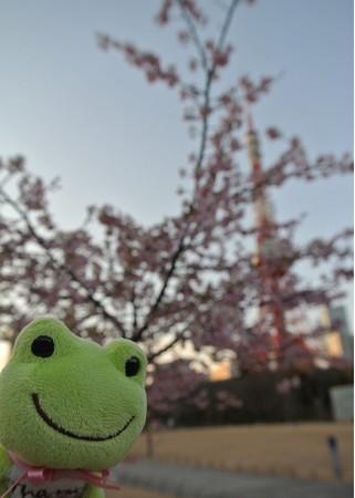 サトザクラと東京タワーとカエル