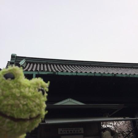皇居乾通り一般公開2016-4