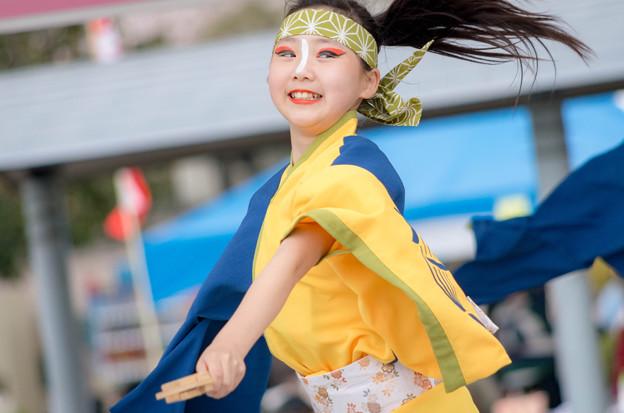 京都さくらよさこい2016 よさこい踊り「さい」