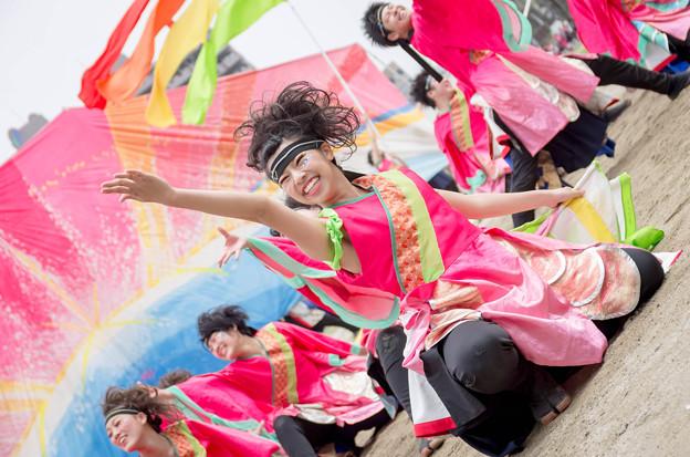 どまつり夜桜 in 岡崎2016 名古屋学生チーム「鯱」