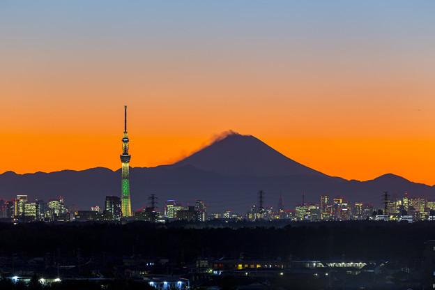Champagne Tree & Mt.Fuji