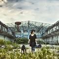写真: 樹林-廢墟