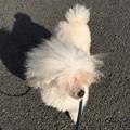 写真: モフ太散歩。暖かい
