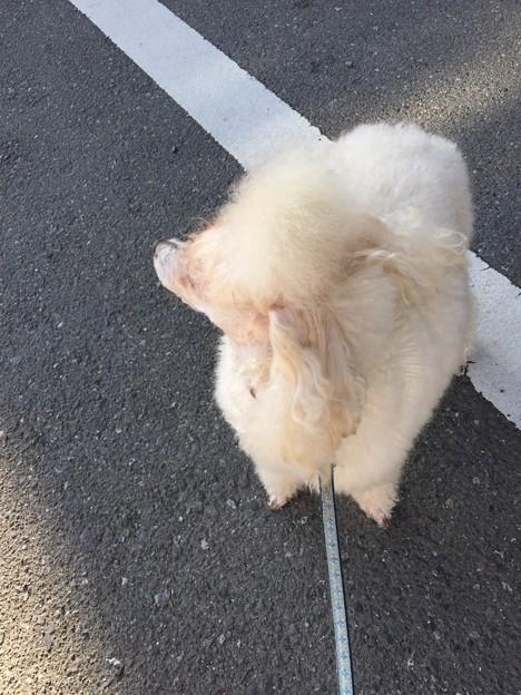 モフ太散歩