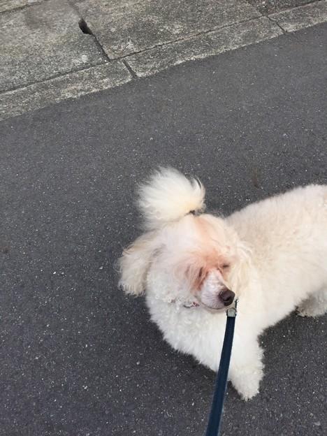 モフ太散歩リハビリ
