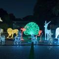 写真: [28]「上野動物園出入り口のイルミネーションイルミネーション」