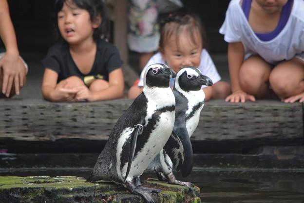 ペンギンさん ツーショット