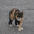 Photos: 可愛い猫ちゃん
