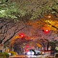夜桜トンネル