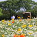 万博記念公園のお花畑