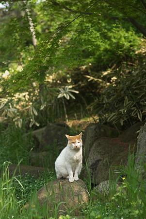 葛西臨海公園・猫