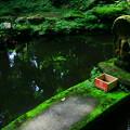 Photos: 431 御岩神社 不動池