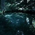 Photos: 泉が森