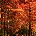 写真: 271 小木津山自然公園  紅葉
