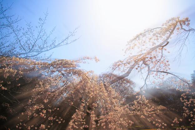 新年度の春
