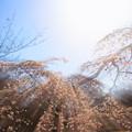 Photos: 新年度の春