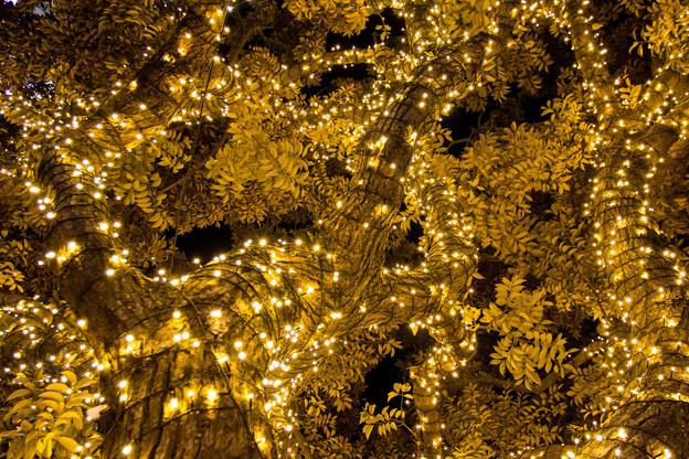 イルミネーションの迷宮  ~The maze of the illuminations~