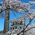 Photos: 28.4.5白石城・益岡公園の桜