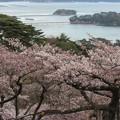 Photos: 28.4.11西行戻しの松公園