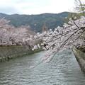 Photos: 4/2神宮道