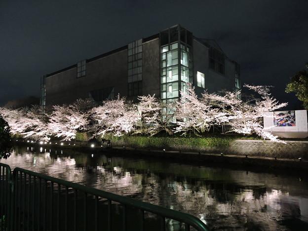 Photos: 京都夜桜