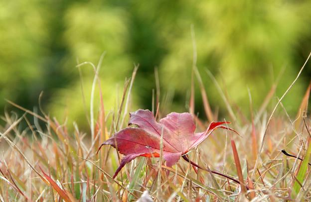 Photos: 秋の歩み