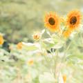 Photos: 盛夏
