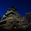 熊本城の夜桜