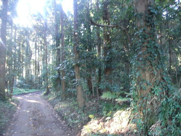 平賀の森林2