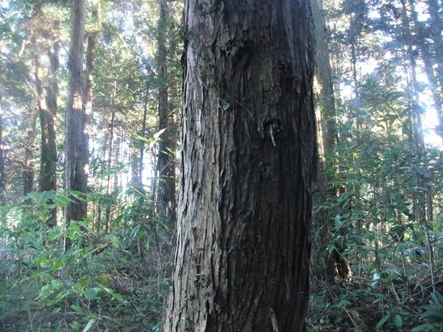 平賀の森林4