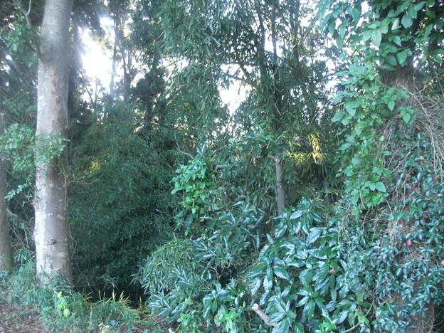 平賀の森林6