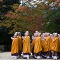 写真: 壇上伽藍の紅葉