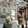 桜 撮る人 祈る人